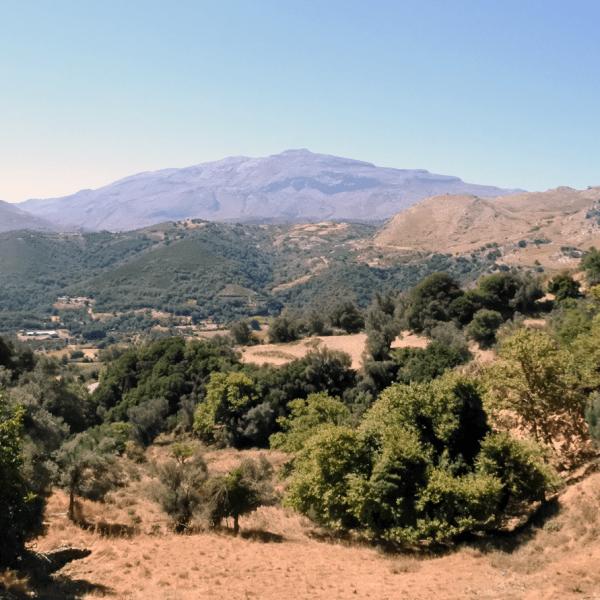Crete Like the Locals: Grape Harvest Where Zeus Was Born