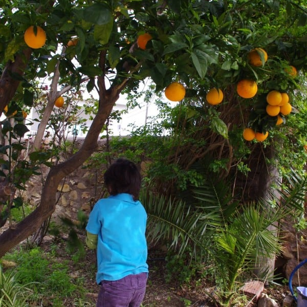 A Kiss of Oranges and Myrtle on Crete